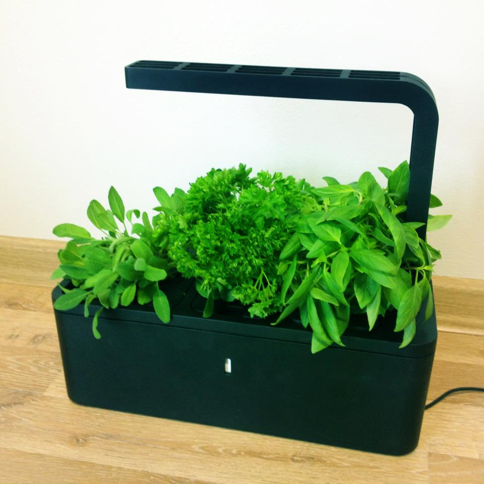Indoor Kitchen Herb Garden Kit Click And Grow Low Maintenance Indoor Vegetable And Herb